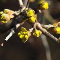 Весна идёт... :: Swetlana V