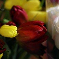 Весна.... :: Марина Щуцких