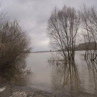 Ранний разлив :: Константин Тимченко