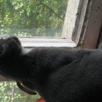 что то в окне :: Влад