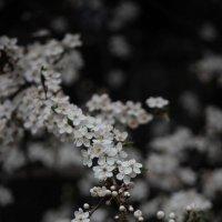 Весна пришла-1. :: Руслан Грицунь