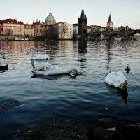 Прага :: Galina Belugina