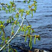 Дыхание весны.. :: Galina ✋ ✋✋