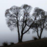 В тумане прятались окрестные брега.... :: Юрий Цыплятников