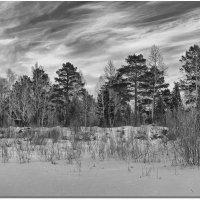 Облики леса :: Евгений Карский