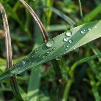 После дождя :: Андрей Майоров