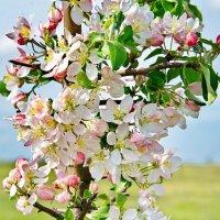 Маленькая жизнерадостная яблонька. :: Павел Лушниченко
