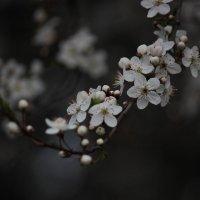 Весна пришла-9. :: Руслан Грицунь