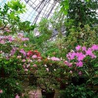 Цветы цветут. :: Ольга Васильева