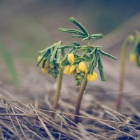 Весна :: Елена Данько