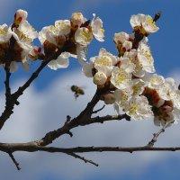 весна :: Алексей Глебов