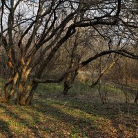 В тени деревьев.... :: владимир