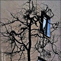 ДЕРЕВО :: Валерий Викторович РОГАНОВ-АРЫССКИЙ