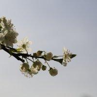 Весна пришла-14. :: Руслан Грицунь