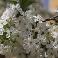 Весна пришла-11. :: Руслан Грицунь