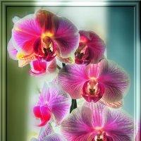 Цветочный мир :: Роман Савоцкий