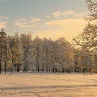 Вечерний свет :: Владимир Гилясев