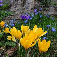 """""""...Благоухает всё в цветении буйном тонет... Земля вокруг, как сплошь один большой букет...&qu :: Galina Dzubina"""