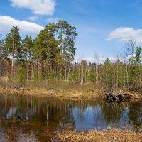 Болотных истин вешняя вода...... :: Лесо-Вед (Баранов)