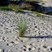 Рисунки ветра на песке :: Марина