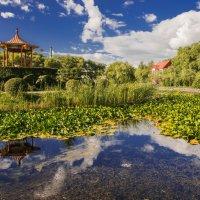 Пруд заросший лотосом. :: Борис Швец