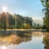 Солнце встало, лес проснулся. :: Фёдор. Лашков