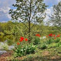 На  берегу  цветы  цветут. :: Валера39 Василевский.