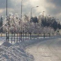 ледянной дождь 2 :: Aлександр Рыжов