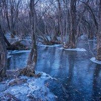 Роща мангровых деревьев :: Олег Окселенко