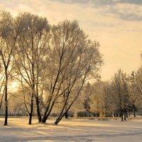 Вечерний луч зимы :: Владимир Гилясев
