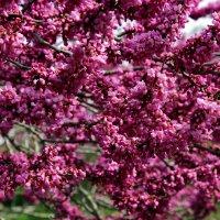 Весны приметы :: Виолетта
