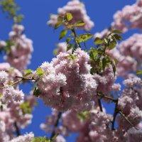 Весна пришла-20. :: Руслан Грицунь