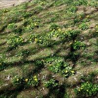 Под моими окнами расцветает весна! :: Нина Корешкова