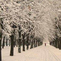 Из зимы в весну :: Владимир Гилясев