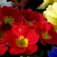 весна в Баку :: Alla Swan