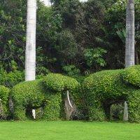 На входе в «Лоро парк» посетителей встречают три зеленых слона :: Елена Павлова (Смолова)