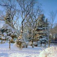 Солнце на снегу. :: Miko Baltiyskiy