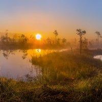 Летнее солнце золотое. :: Фёдор. Лашков