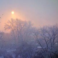 Зима. Утро. Туман. :: Евгения Корнилкова