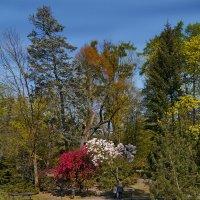 Весенний парк :: Дмитрий Лебедихин