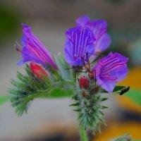 Цветок с комаром и еще с кем-то :: Александр Деревяшкин