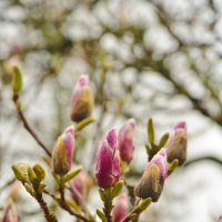 Весна в Бельгии :: Petr Popov
