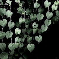 Сердец стремление.. :: ЕВГЕНИЯ