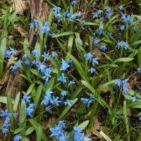 Весна идет .... :: MPS