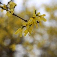 Весна пришла-28. :: Руслан Грицунь