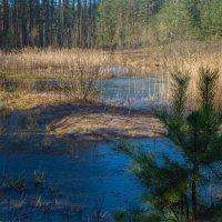 Мартовский лес :: Александр Березуцкий (nevant60)