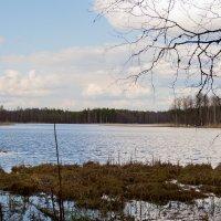 Весна :: Владимир Лазарев