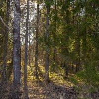Весенний лес :: Владимир Лазарев