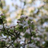 Весна пришла-35. :: Руслан Грицунь