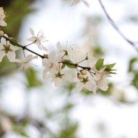 Весна пришла-32. :: Руслан Грицунь
